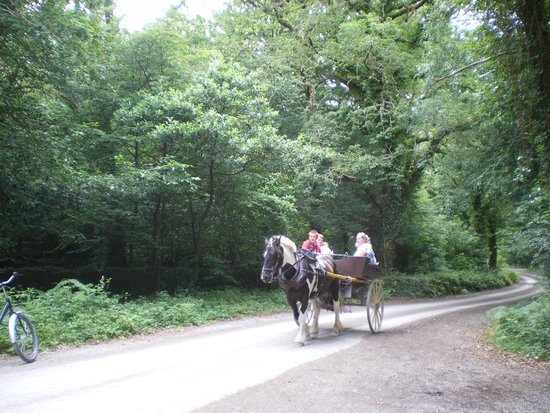 Muckross House, Gardens & Traditional Farms: horse and carriage