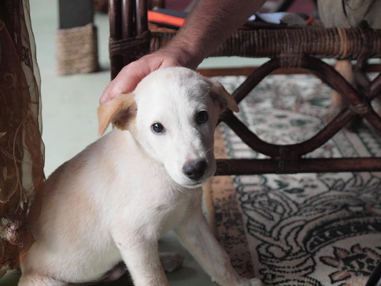 The Kebun: cute puppy number one