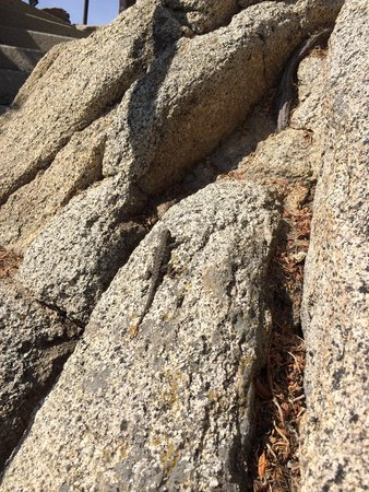 Palm Springs Aerial Tramway: These little guys are everywhere !!!