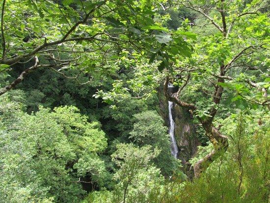 Devil's Bridge Falls: Waterfall through the trees.