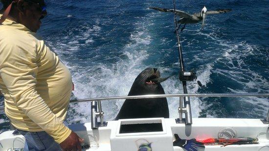 Villa del Palmar Beach Resort & Spa Los Cabos: Pancho jumping on board on the marina