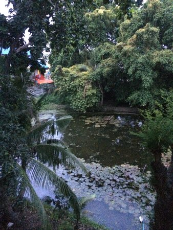 Baan Lotus Guest House : Vue de la chambre