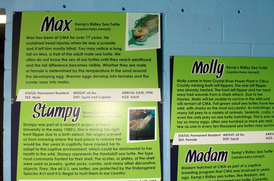 Clearwater Marine Aquarium: Stories of some of the Turtles