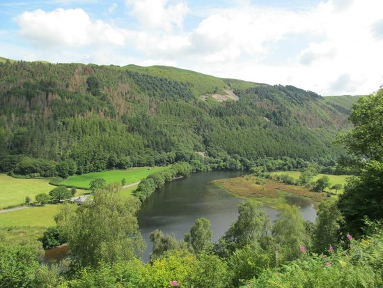 Vale of Rheidol Railway: View from the train.