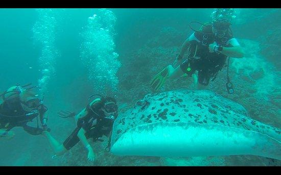 Kuredu Island Resort & Spa: Diving at Tinga Giri