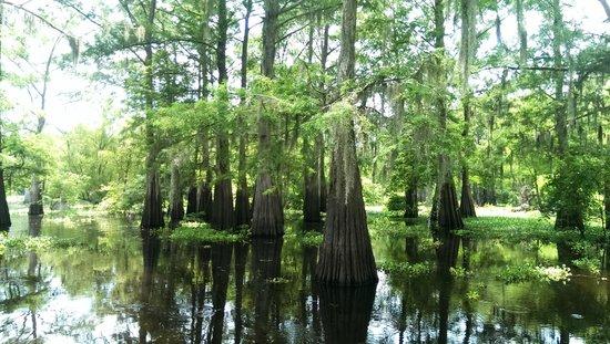 Atchafalaya Basin Landing & Marina- Swamp Tours: Swamp view