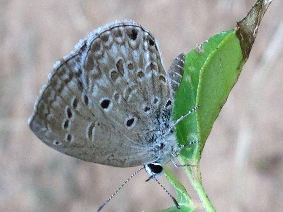 Club Mahindra Munnar: Grass jewel
