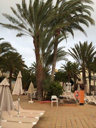 ClubHotel Riu Oliva Beach Resort : Zona de tumbonas piscina (Oliva Village)