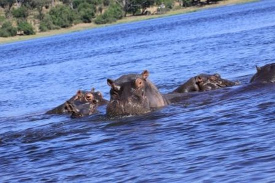 Ngoma Safari Lodge: A la rencontre des Hippos