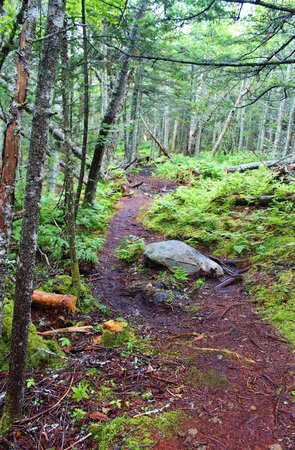 Quoddy Head State Park: easy walking trail