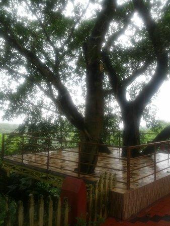 Chamundi Hill Palace Ayurvedic Resort: Sehr alter Banyan-Baum