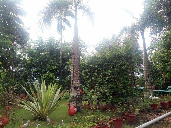 Chamundi Hill Palace Ayurvedic Resort: Garten