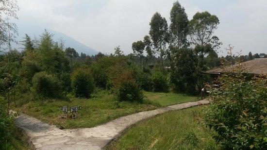 Mountain Gorilla View Lodge: Hotelgelände