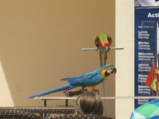 Occidental Jandia Mar: Parrot show