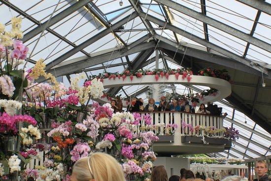 Keukenhof: Орхидеи