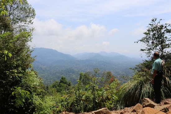 Taman Negara National Park: View from one of the jungle walks