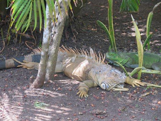 Iberostar Cozumel: grounds
