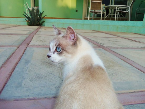 Compass Point Dive Resort: Beautiful Compass kitty