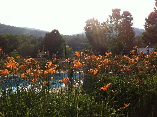 Adirondack Sunrise Motel & Cabins : Daylillies surrounding pool..mountains in back