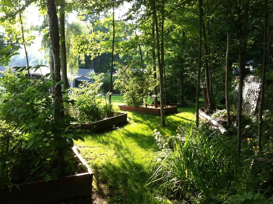 Adirondack Sunrise Motel & Cabins : Back garden