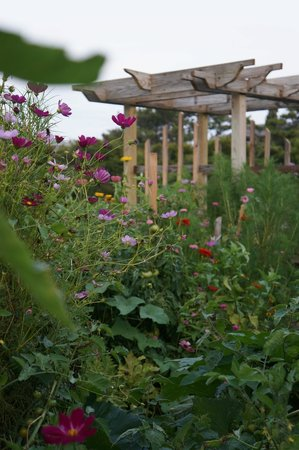 First Colony Inn: Delightful flower and vegetable garden on the property