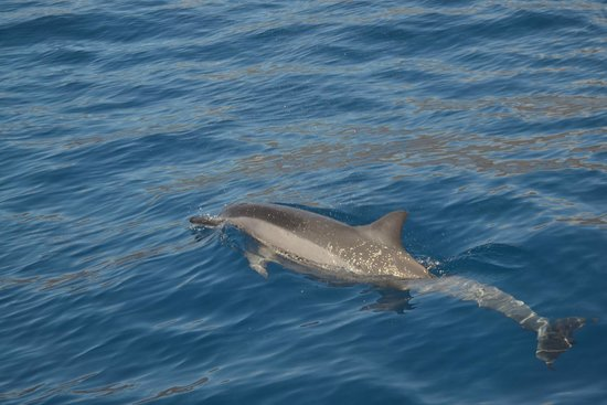 Maui Adventure Cruises : First dolphin sighting