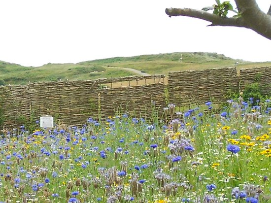 Hengistbury Head : The wild flower garden behind the Visitors Centre