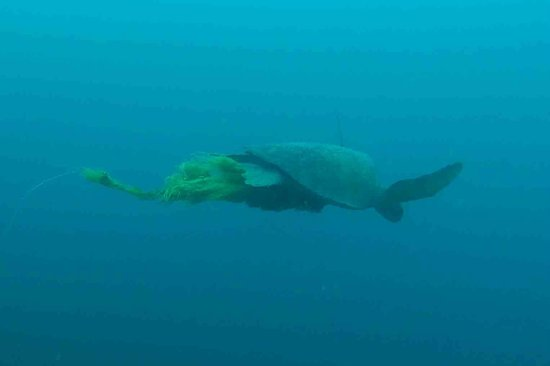 Panama Dive Center : turtle 2