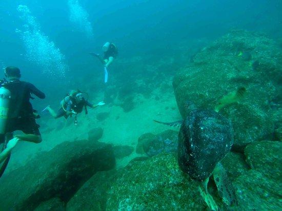 Panama Dive Center : turtle