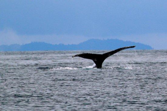Panama Dive Center : whales 2
