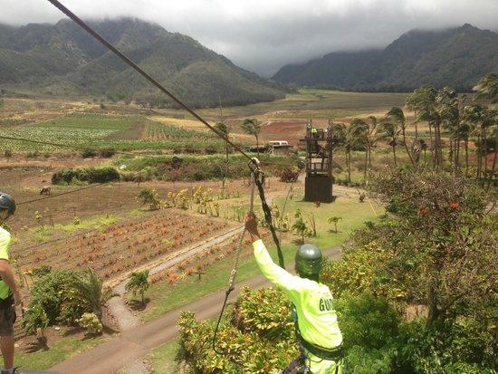 Maui Zipline Company: Высоко ... отличный вид!