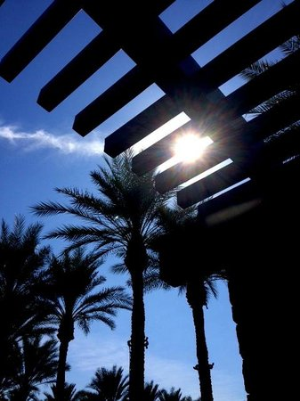 The Westin Kierland Resort & Spa: Patio cover just outside the meeting area. Amazing well groomed palm tree lined walkways.