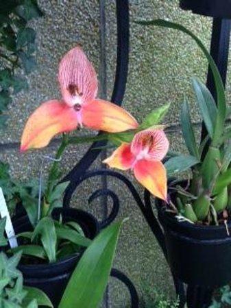 Orchids Longwood Gardens July 11, 2014