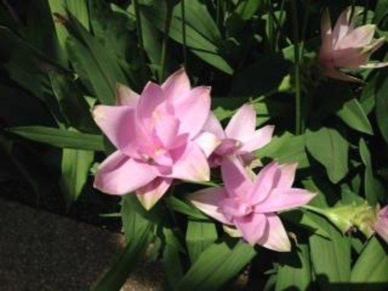 Water Lilies Longwood Gardens July 11, 2014