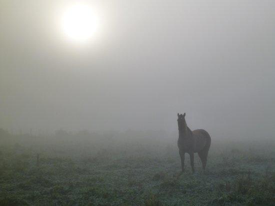 Estancia San Ambrosio: Morning mist over the fields.