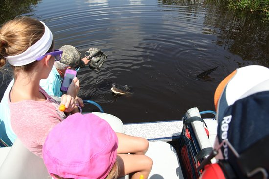Everglades River of Grass Adventures -Tours: Robert getting an alligators attention