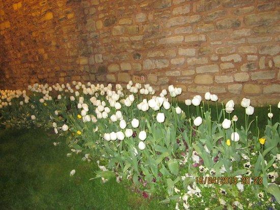 Mono Suites: Тюльпаны Стамбула