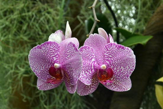 Duke Farms: Orchids in Conservatory