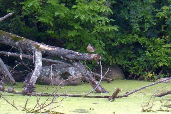 Duke Farms: Bird on a log