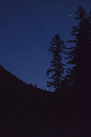 Momentum River Expeditions: Stars and lodge pole pine