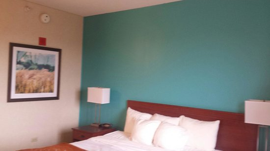 Comfort Suites O'Hare: New paint a little bright but nice.