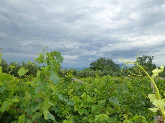Azienda Agricola Raval: Außen