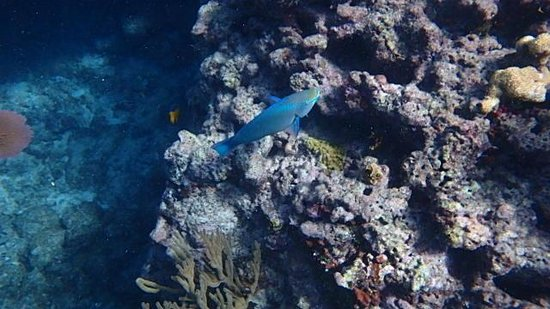 Spirit Snorkeling: Check out how clear the water is