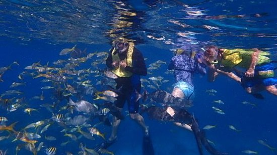 Spirit Snorkeling: fish like you would not believe,  hand feeding fish with hard boild eggs,