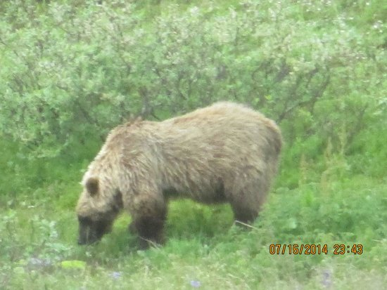 Denali Cabins: one of many animals seen on our bus trip into Denail!!