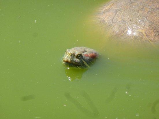 Parc Zoologique de Frejus : .