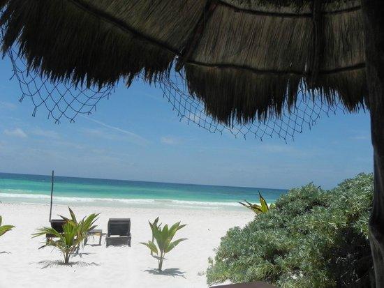Playa Selva: En la palapa de la playa