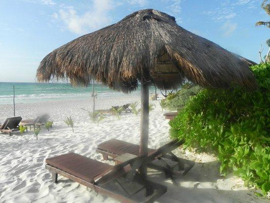 Playa Selva : Camastro y palapa de playa