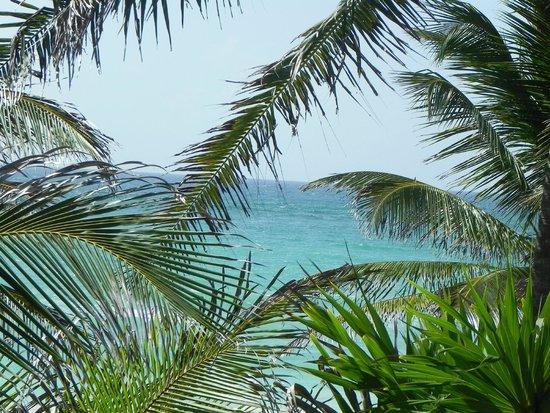 Playa Selva : Vista desde la terraza