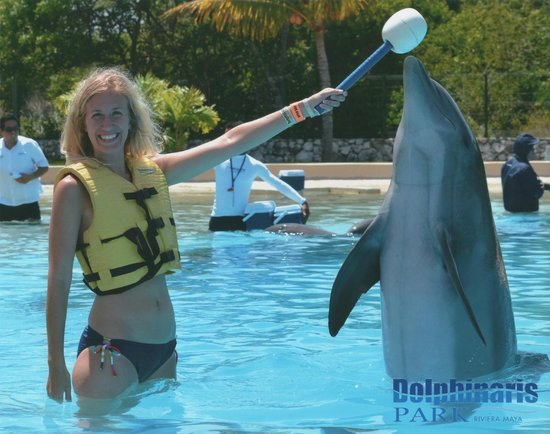 Dolphinaris Riviera Maya Park: Dolphin trainer for a day